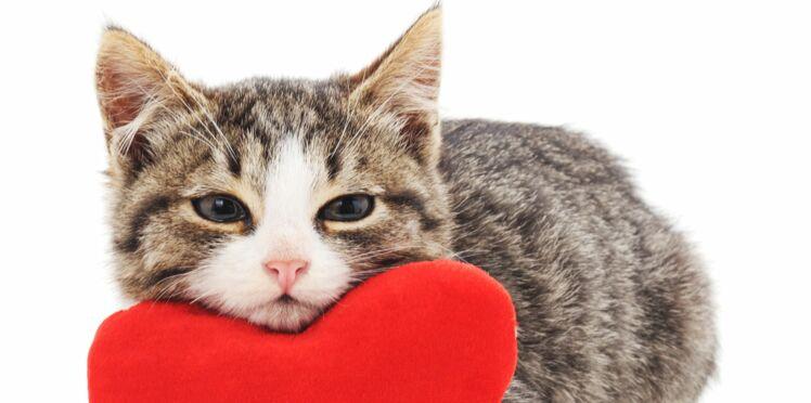 6 conseils pour bien adopter un chat