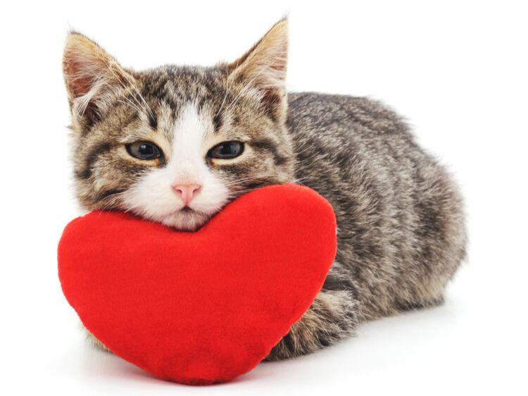 Online dating kostenlos ohne anmeldung pdf