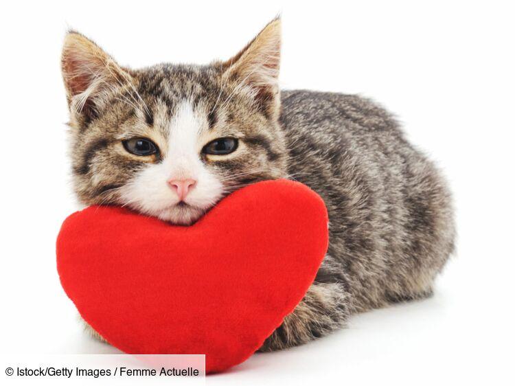 6 Conseils Pour Bien Adopter Un Chat Femme Actuelle Le Mag