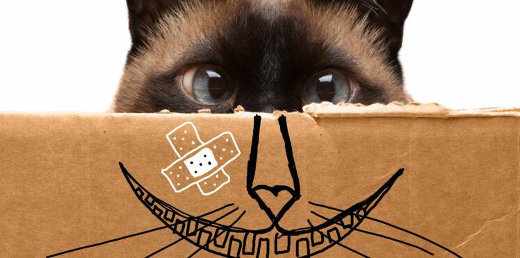 7 faits insolites sur les chats !