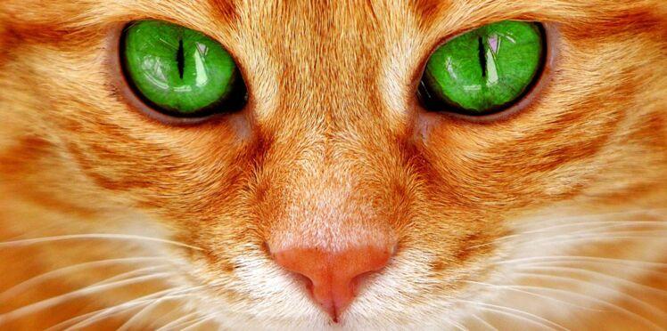 7 qualités du chat dont on peut s'inspirer pour le travail