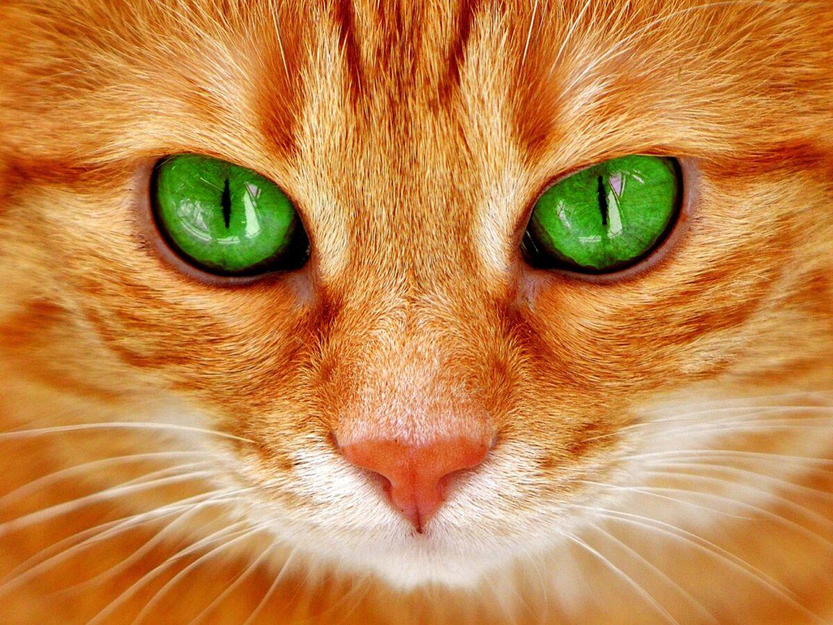 Bruit Griffe Chien Parquet 7 qualités du chat dont on peut s'inspirer pour le travail