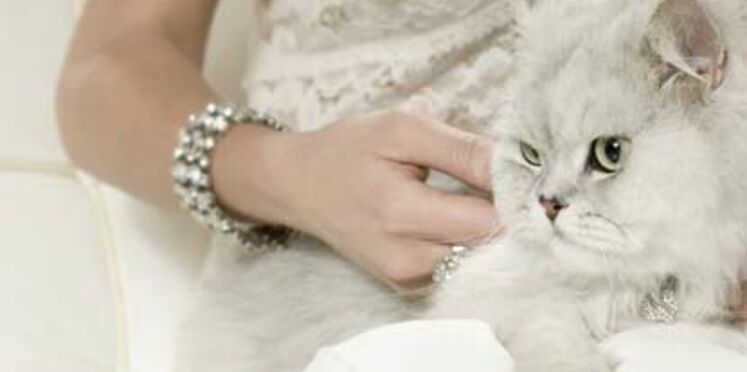 Accessoires chics pour chats coquets