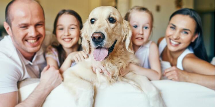 5 bonnes raisons d'adopter un chien adulte