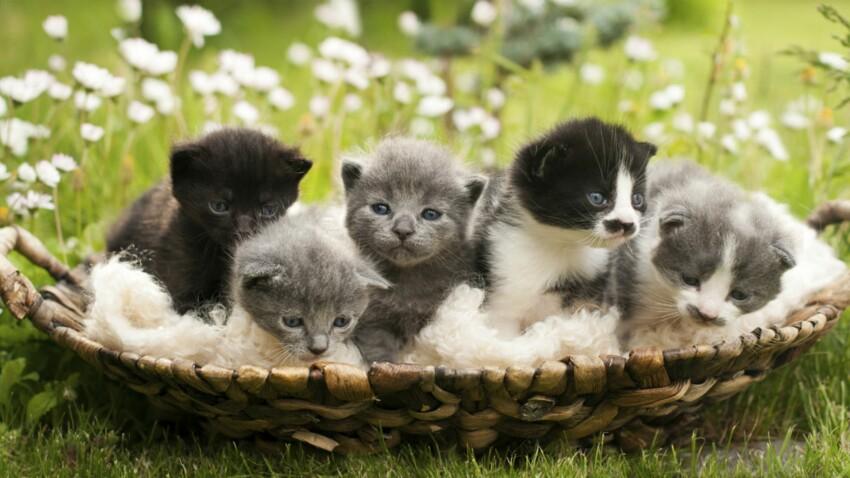 Adopter un chaton : nos conseils pour choisir le bon
