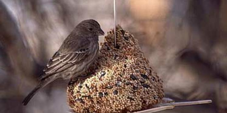 Aider les oiseaux à passer l'hiver