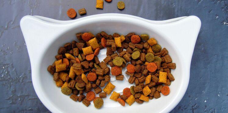 Alimentation du chat : les bons réflexes à adopter