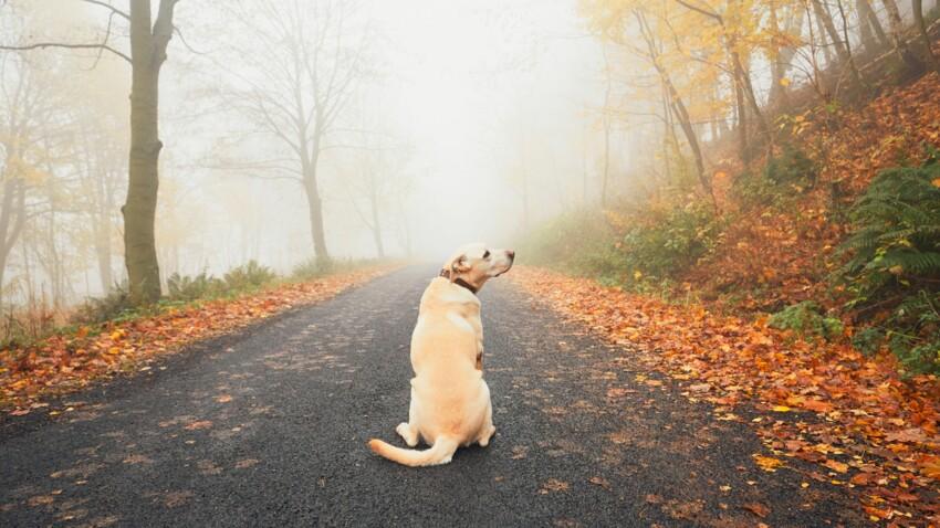 Animal perdu : les bons réflexes pour le retrouver au plus vite
