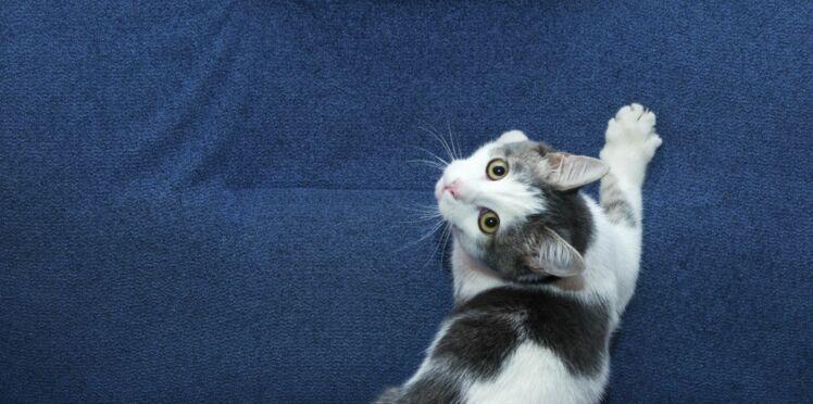 Apprenez à décoder les manies de votre chat