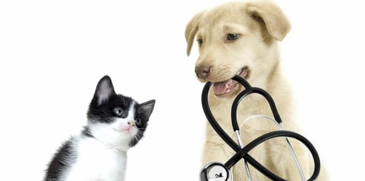 Apprenez les gestes qui peuvent sauver vos animaux