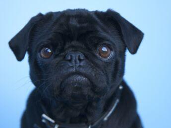 Assurance animaux de compagnie : faut-il y souscrire ?