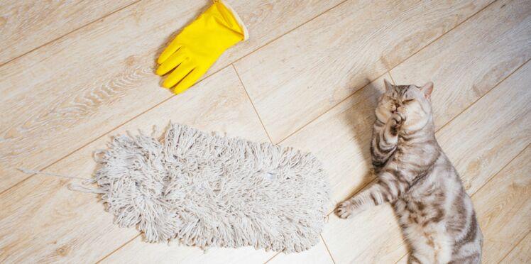 Avoir une maison saine avec un chat, c'est possible !