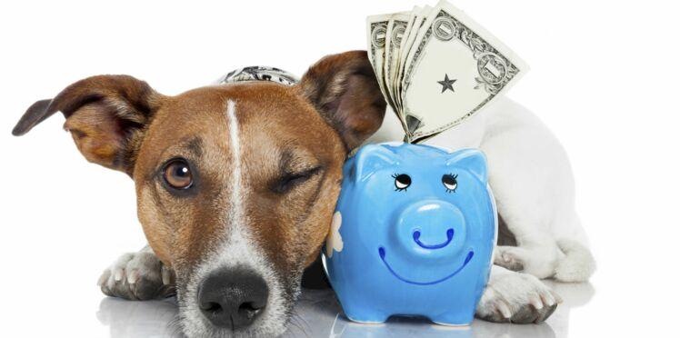 6 astuces pour gérer mon budget animaux