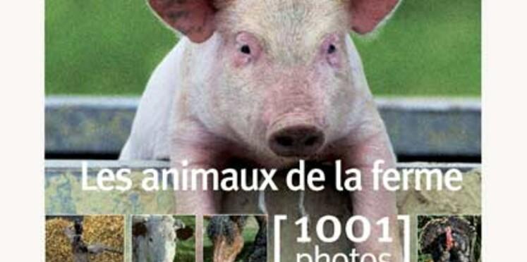 Cadeaux à moins de 20 euros pour nos amis les bêtes