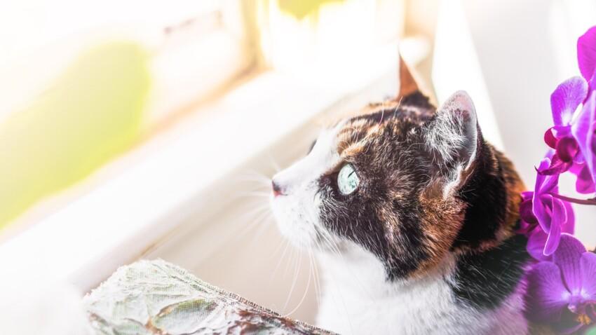 Canicule : attention aux chutes de chats