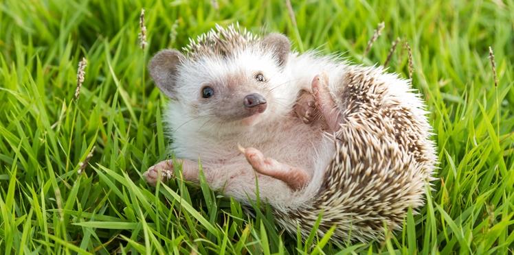 VIDEO - Ces bébés animaux qui nous font craquer