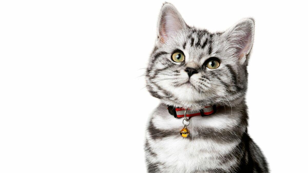 Mon Chat Dort Sur Mes Pieds chat : 10 signes qui prouvent qu'il est heureux ! : femme