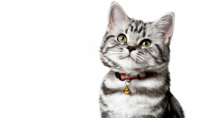 grosse queue dans adolescent chatte