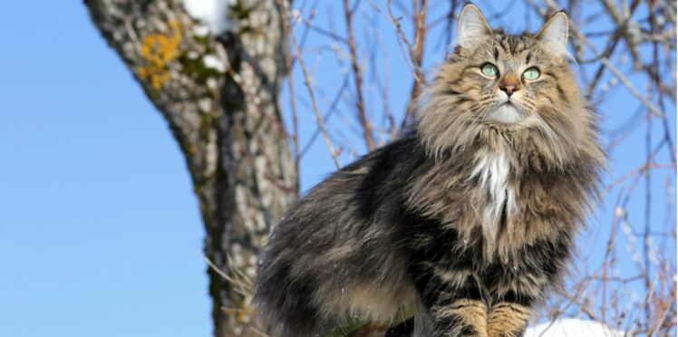 Comment gérer un chat baroudeur ?