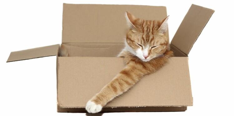 Mon chat et moi on déménage !