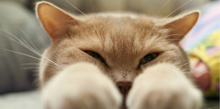 Mon chat sera-t-il heureux en pension ?