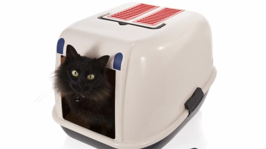 Mon chat refuse d'utiliser sa litière, comment faire ?