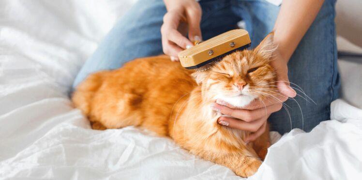 Chat ou chien : 8 idées de formation et coaching avec et pour mon animal