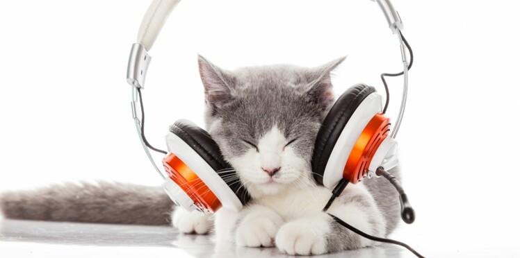Chat stressé ? Faites-lui écouter de la musique !