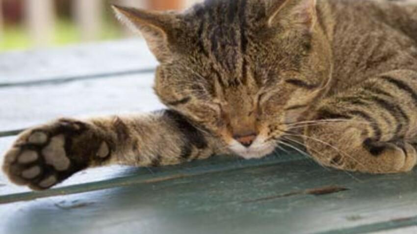 Chat vermifugé les yeux fermés