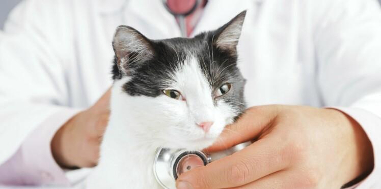 Comment préparer mon chat à sa visite chez le vétérinaire