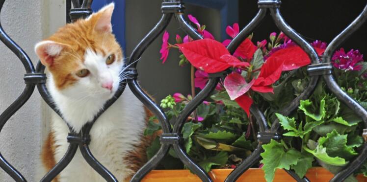 Comment est-ce que les chats voient le monde ?