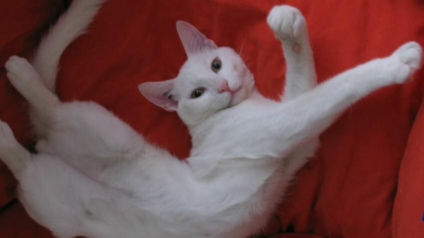 Nous avons le plaisir de vous présenter les chats de la Rédac !