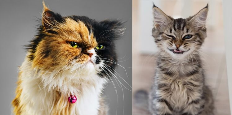 Les chats et leurs drôles d'expressions