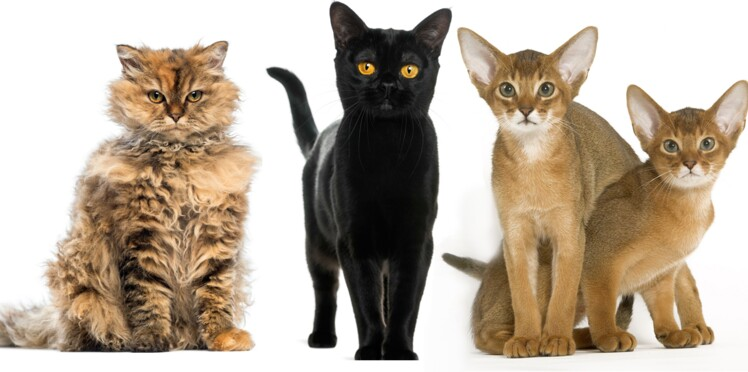Nos chats sont vraiment incroyables !