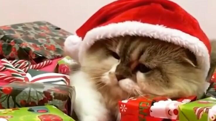VIDÉO - Ces chats qui nous ont fait rire en 2016