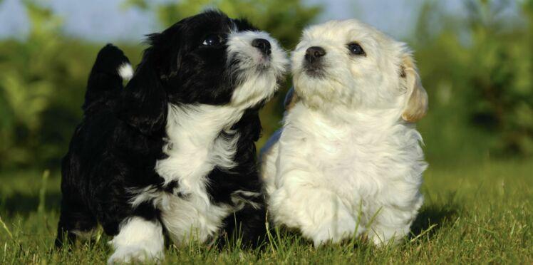 Comment  bien gérer mon chien bagarreur