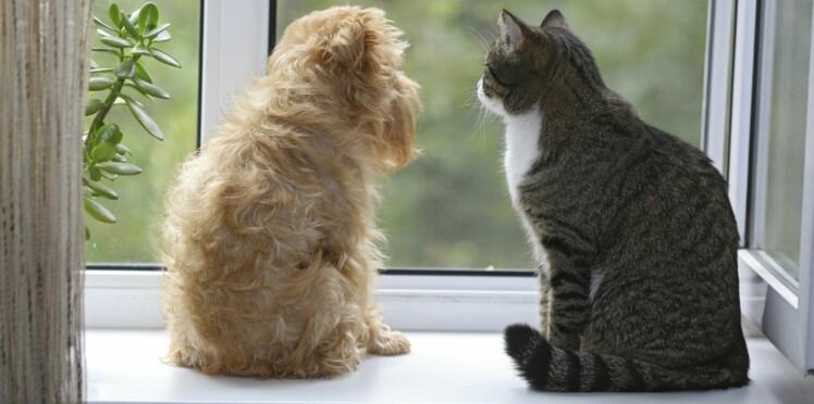 Chien et chat : jusqu'où va leur 6ème sens ?