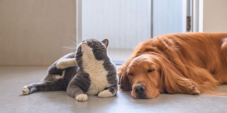 Chien et chat : nos astuces naturelles pour se débarrasser des puces