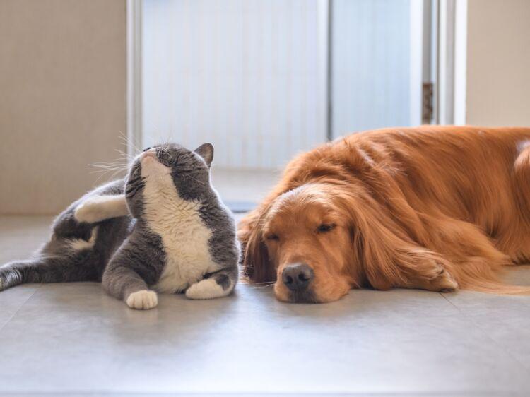 chien et chat nos astuces naturelles pour se d barrasser des puces femme actuelle le mag. Black Bedroom Furniture Sets. Home Design Ideas