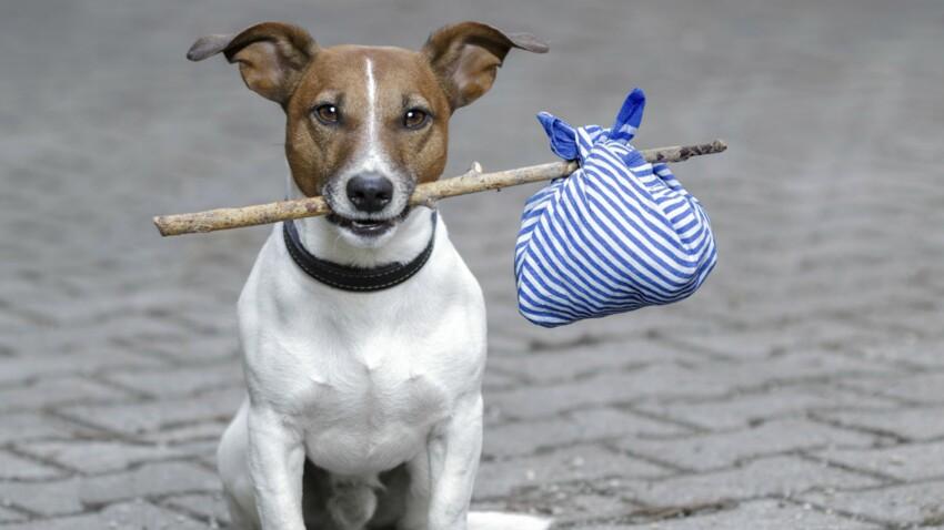 Puis-je emmener mon chien partout ?