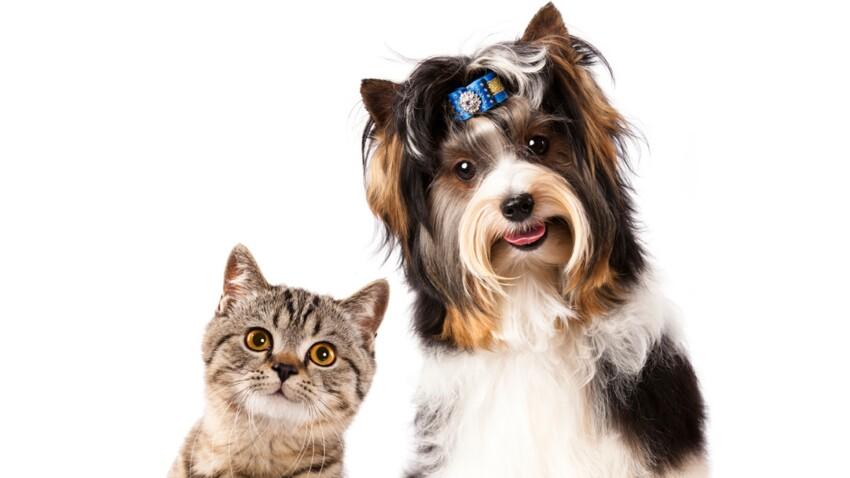 Chien et chat : comment les faire cohabiter en harmonie ?