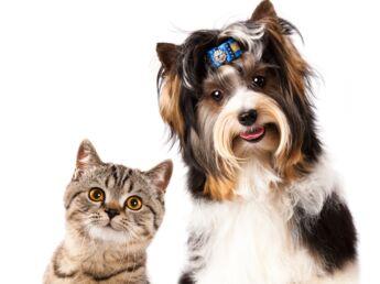Chien et chat sous le même toit : mode d'emploi !