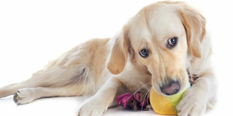 Votre chien est-il hyperactif ?