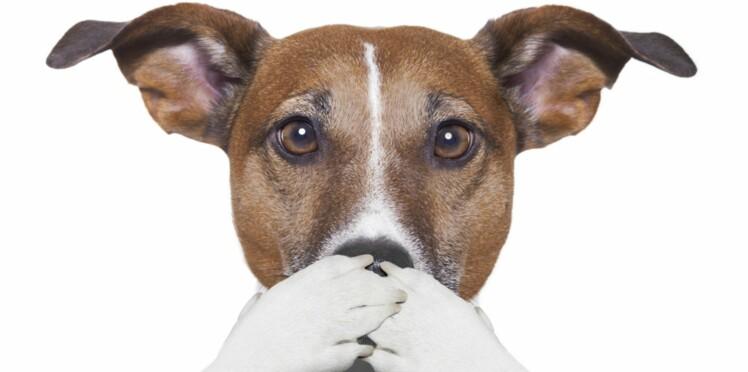 Comment aider mon chien à surmonter ses peurs ?