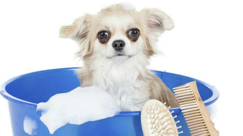 C'est moi qui toilette mon chien !