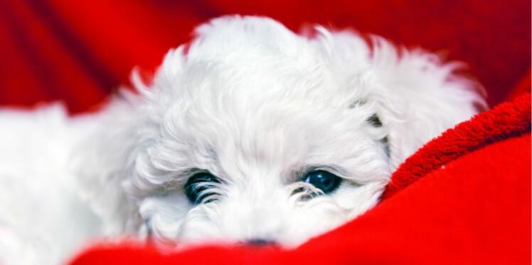 Je craque pour les chiens tous blancs !