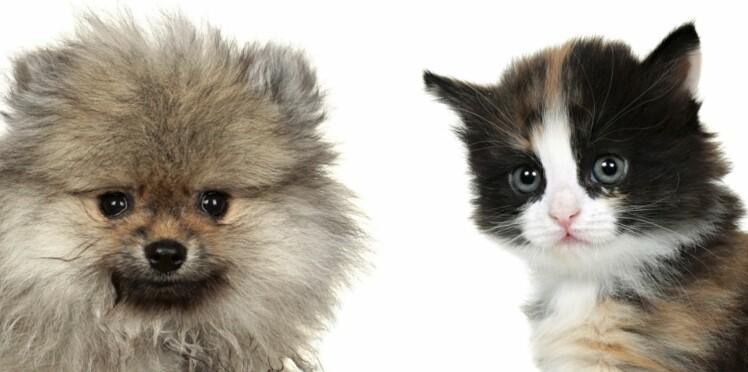 Chien ou chat, lequel est fait pour vous ?