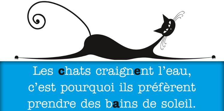 Citations et poèmes sur les chats : nos préférés