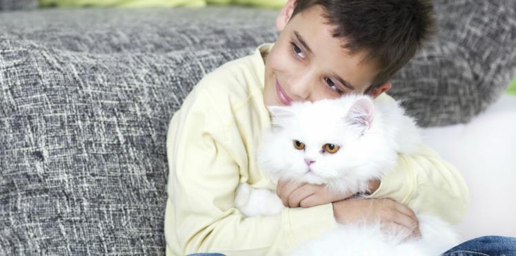 Cohabitation entre chat et enfant : les idées reçues en 10 points