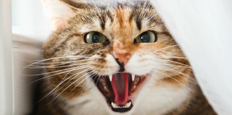Comment désamorcer les conflits avec son chat ?
